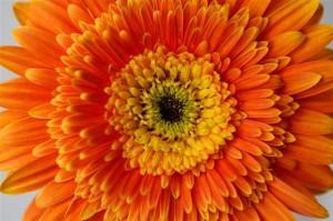 Fotolia_531904_O_fiore-arancio